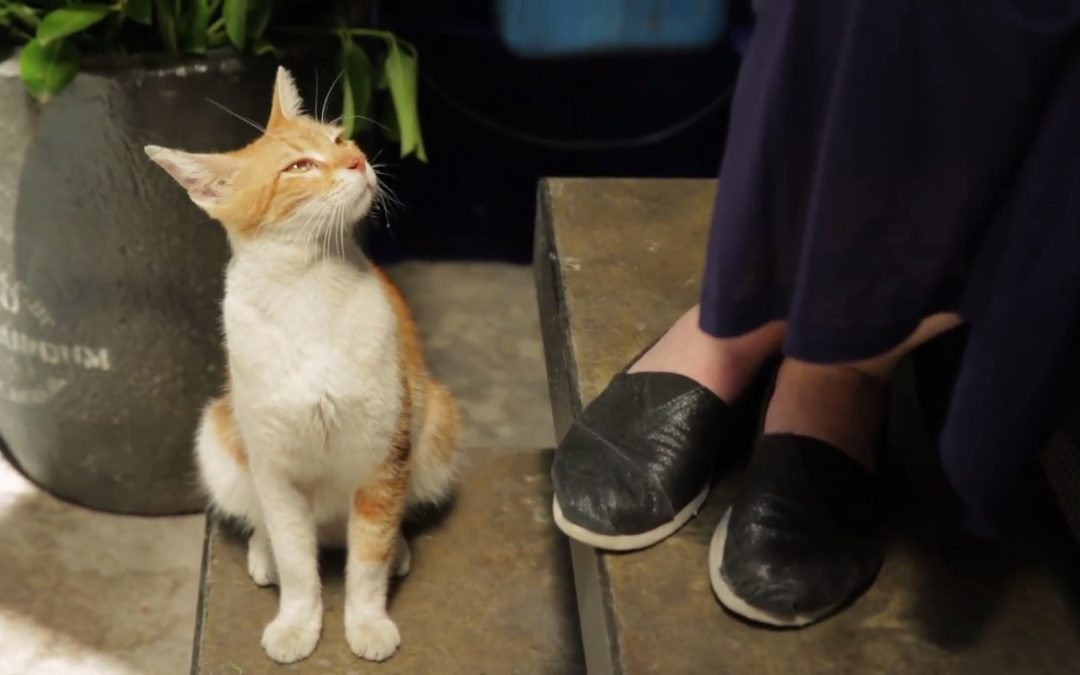 Soft, Scrappy Survivors: Kedi's Melancholic Ode to the Street Cats of Istanbul